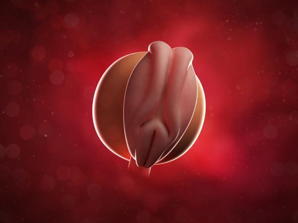 مراحل الحمل ونمو الجنين 1